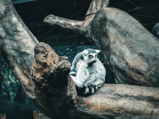 Зоопарк в Торонто .jpg