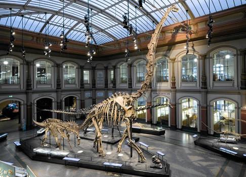 Музей естествознания экспонаты.jpg