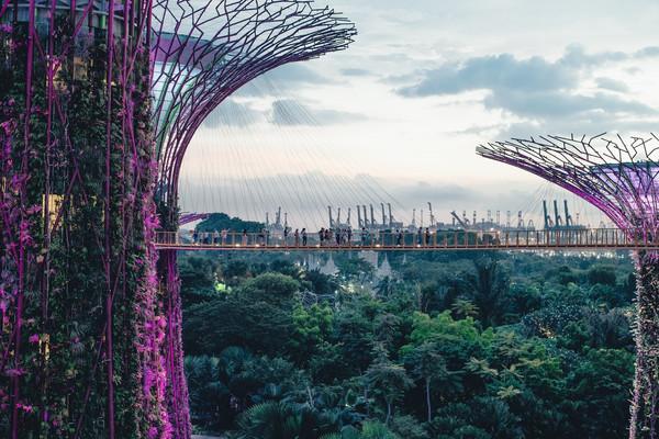 Футуристический ботанический сад Сингапу