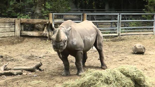 Берлинский зоопарк Носорог.jpg