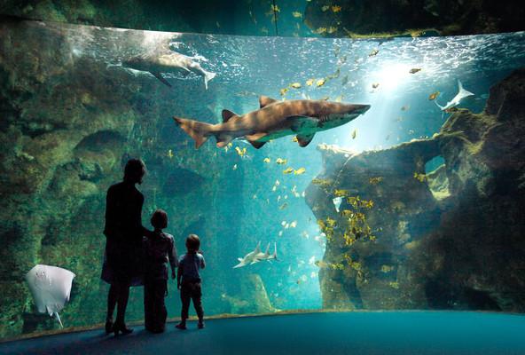 Океанариум CineAqua в Париже.jpg