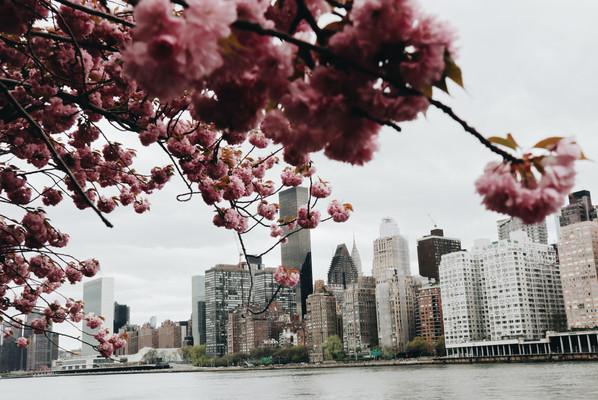 Нью-Йорк Сити.jpg
