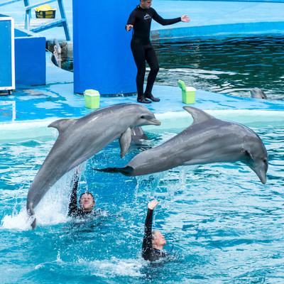Шоу дельфинов Мар-дель-Плата.jpg
