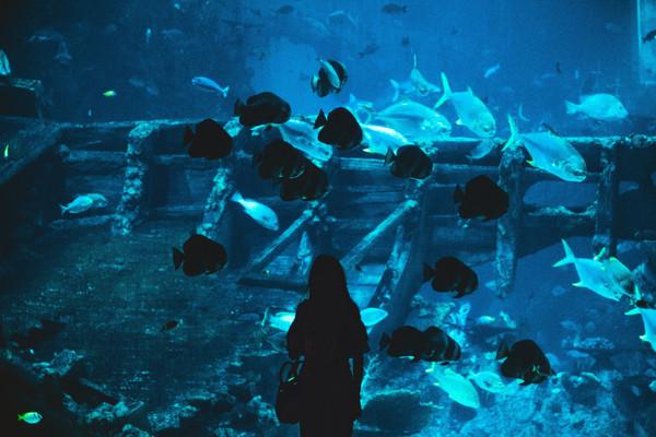 S.E.A. Aquarium океанариум Сингапур.jpg