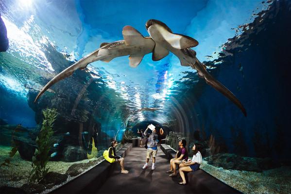 Аквариум Siam Ocean World бангкок.jpg