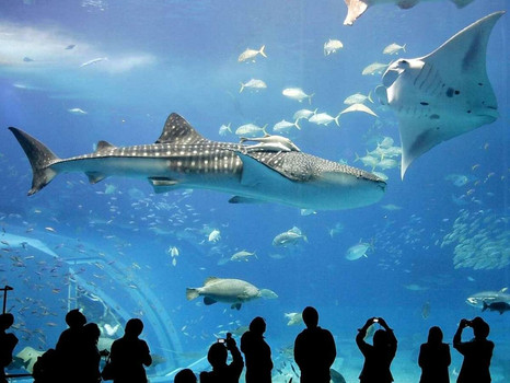 Берлинский аквариум АкваДом.jpg