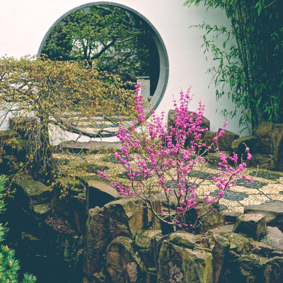 Ботанический Сад Snug Harbor Статен-Айле