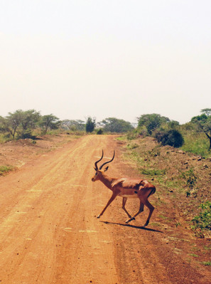 Национальный парк Найроби.jpg