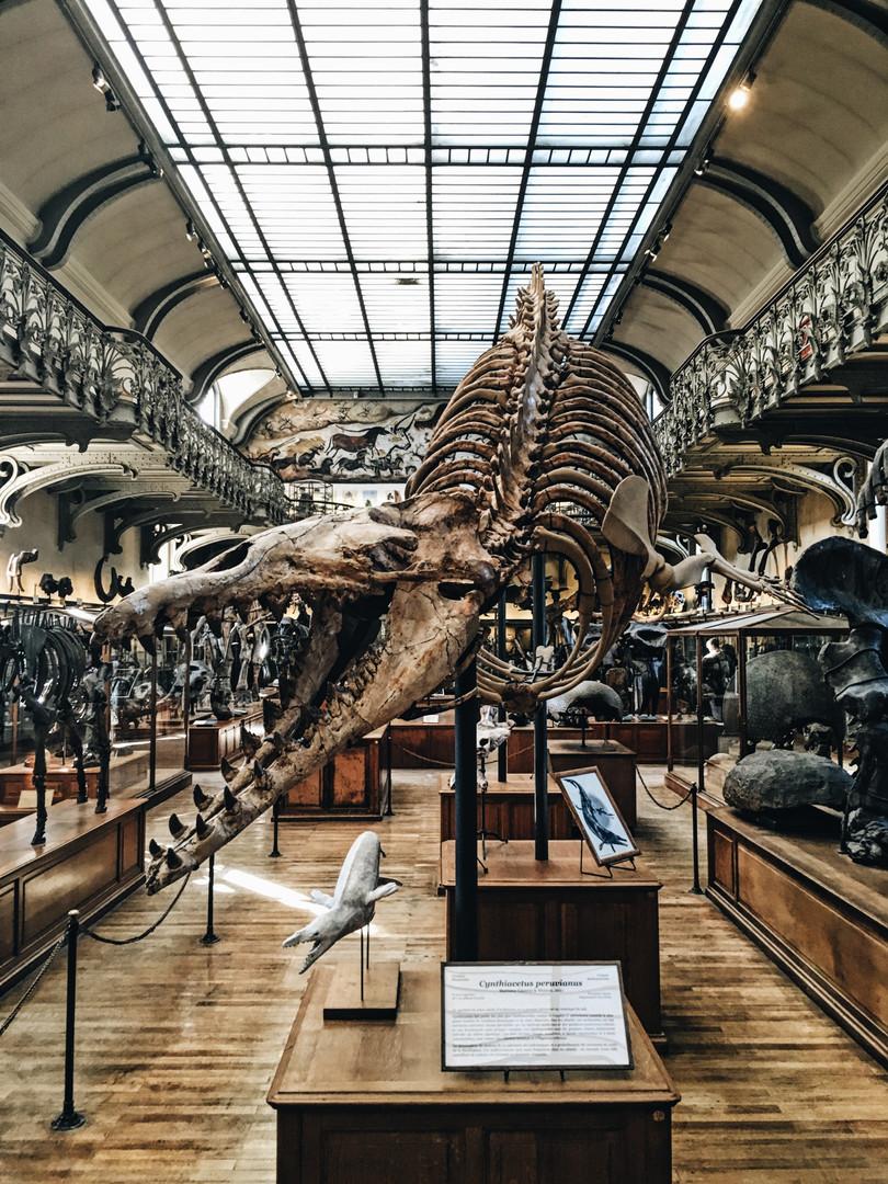 Музей естественной истории Париж.jpg
