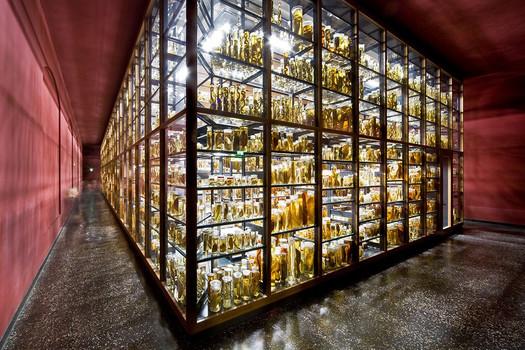 Музей естествознания в Берлине.jpg