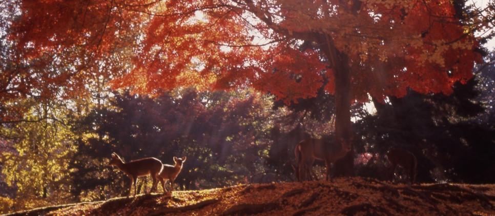 Todai-ji Temple_Nara.jpg