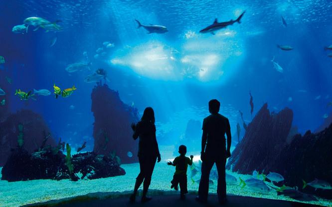 ケアンズ水族館