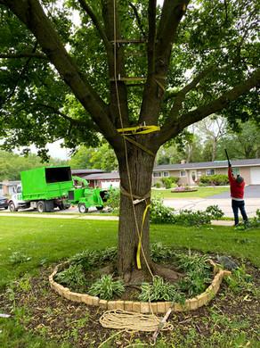 Professional Tree removal,Tree trimming Batavia IL , St Charles, Geneva IL , Aurora IL , Naperville IL