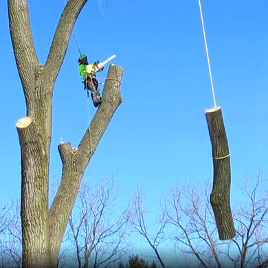 Professional Tree removal,Tree trimming Batavia IL , St Charles, Geneva IL , Aurora IL , Naperville IL, Rockford IL