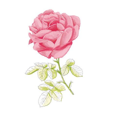Durance, gamme Ancian Rosa.
