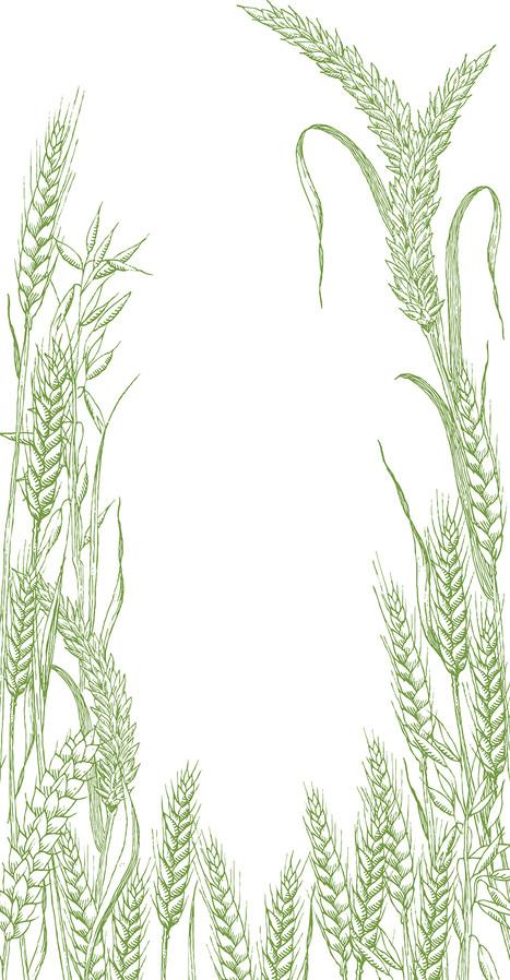 Pain Moisan, illustration pour les sachets de pain.