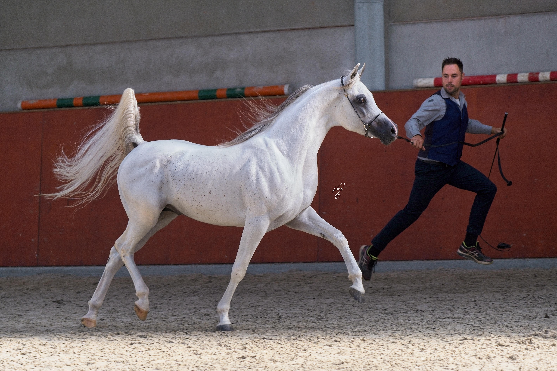Mansour Silver Exp