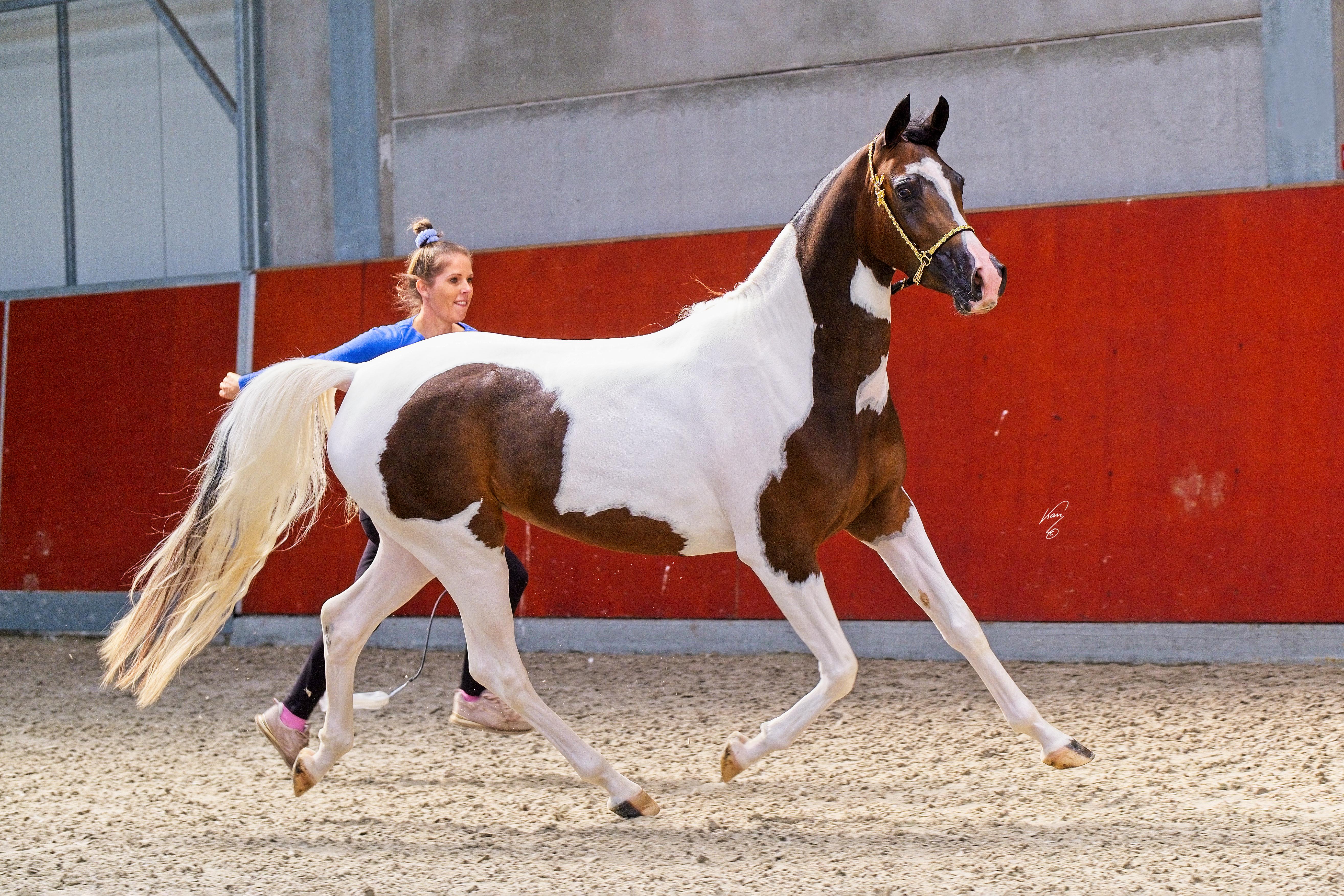 Winner junior fillies novice