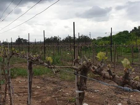 ביקור ביקב: נווה ירק