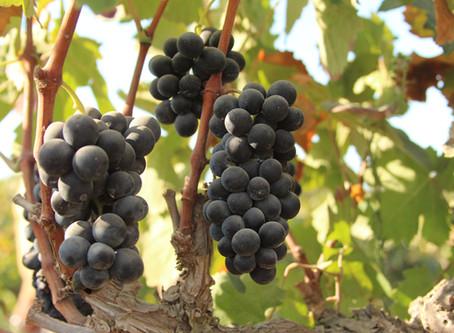 10 יינות מומלצים לחג