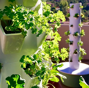 Tower Garden Picture.png