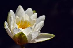 conscience en soi eft technique de libération émotionnelle psychothérapie sarzeau li chin lu thérape