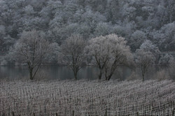 winter wine