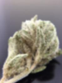 Portland Marijuana Shop Providing Portland Quality Cannabis