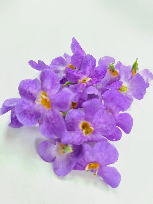 Purple micro princess flower