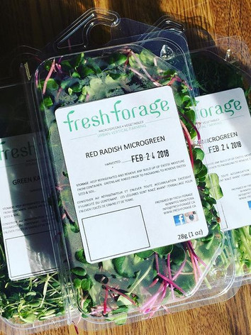 mj_reyes Picked up these beauties from @fresh_forage for all your microgreens needs see Jeff from @fresh_forage. These will look and taste amazing on any dish.