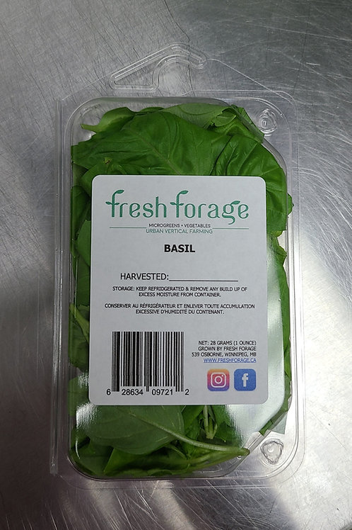 Basil Retail Pack of 3