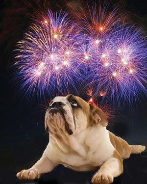 Firework Season Pet Remedy