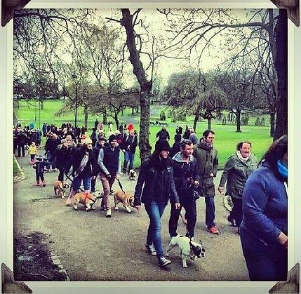 Glasgow Bulldog Walk