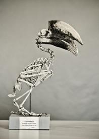 Horniebird