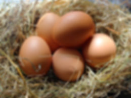 Brambling Fields bed & Breakfast Winfred Atwell  Celia Johnson  Peggy Lee  Dame Sybil Thorndike Our Hens