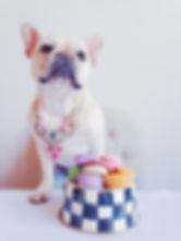 Franny the French Bulldog children's book A Family for Franny the Frenchie