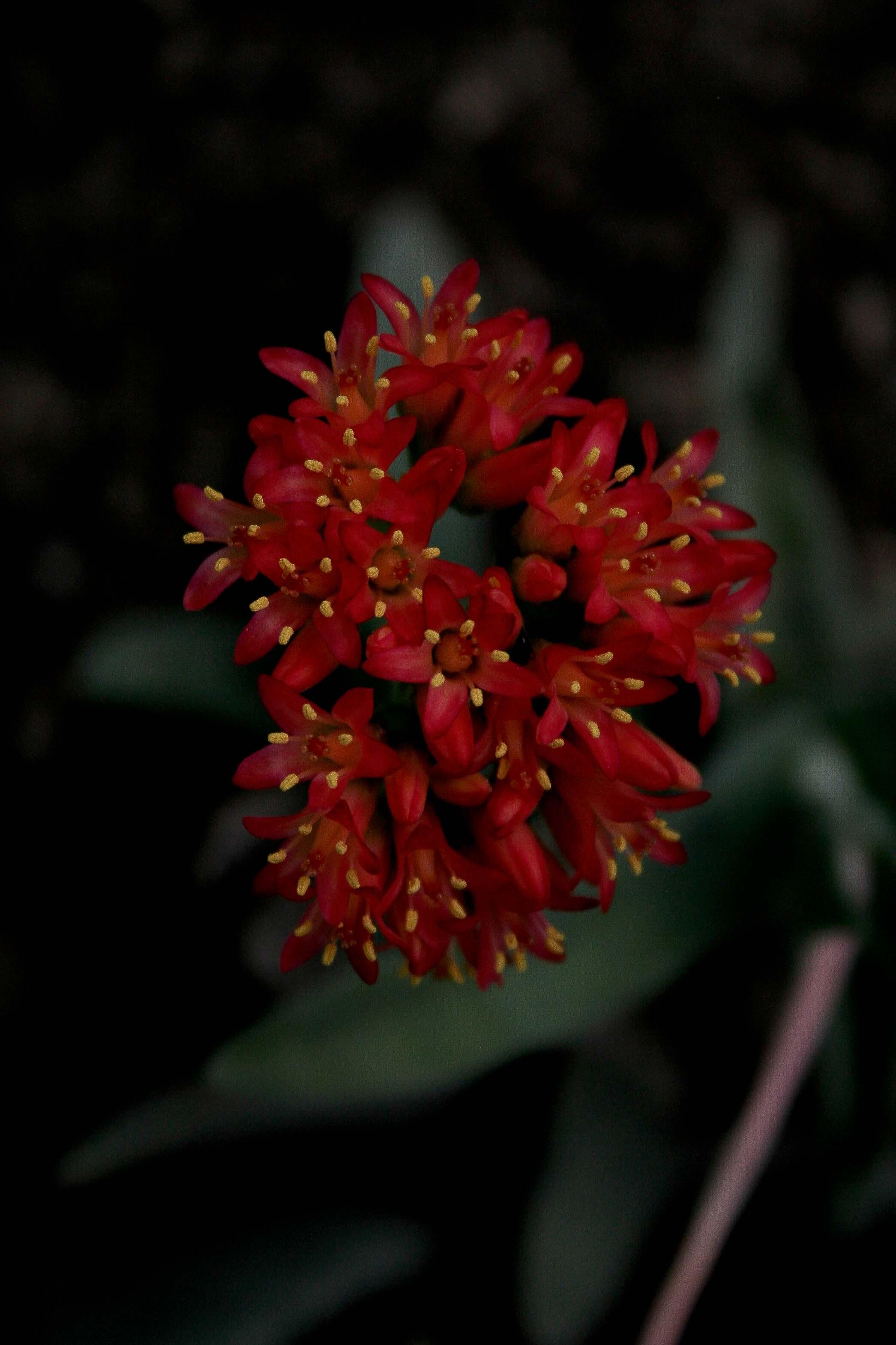 jpHumbert_Botanic-101
