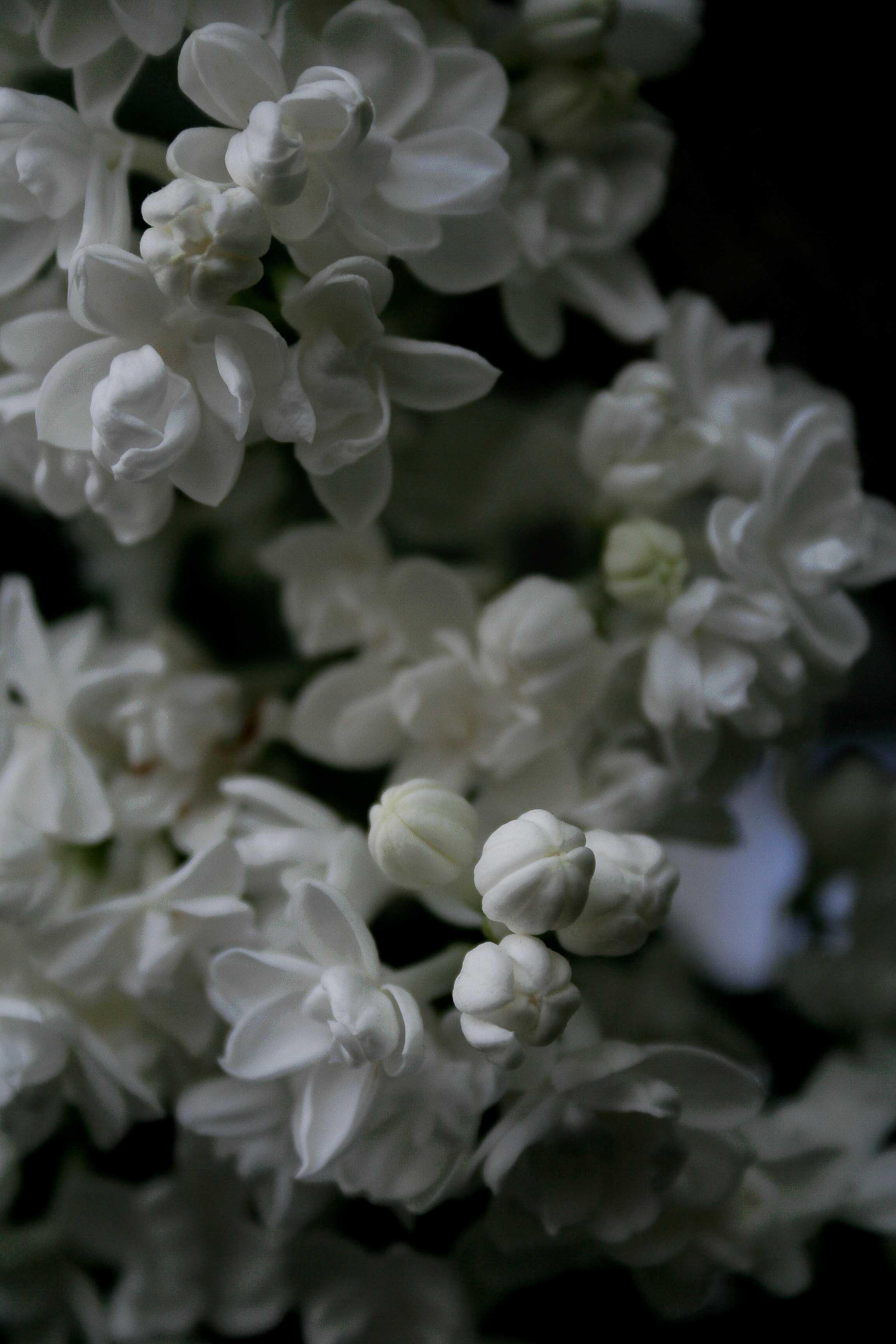 jpHumbert_Botanic-17