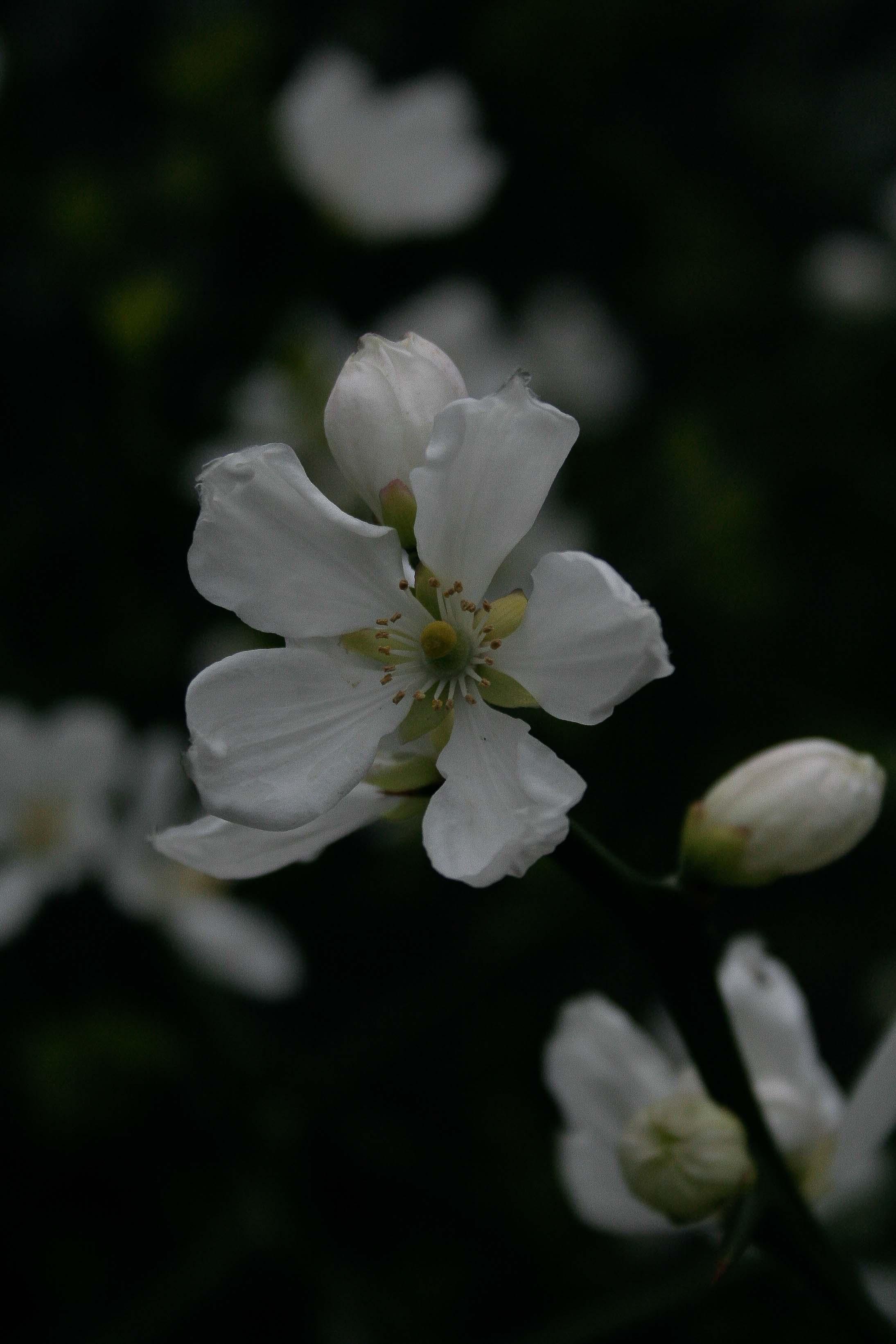 jpHumbert_Botanic-66