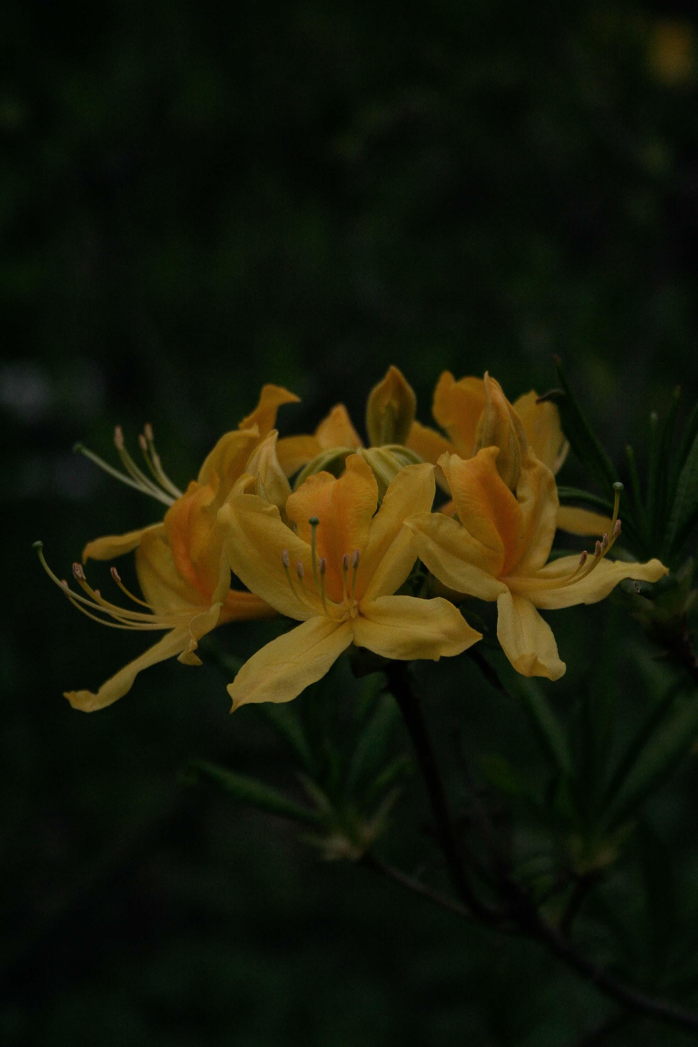 jpHumbert_Botanic-67
