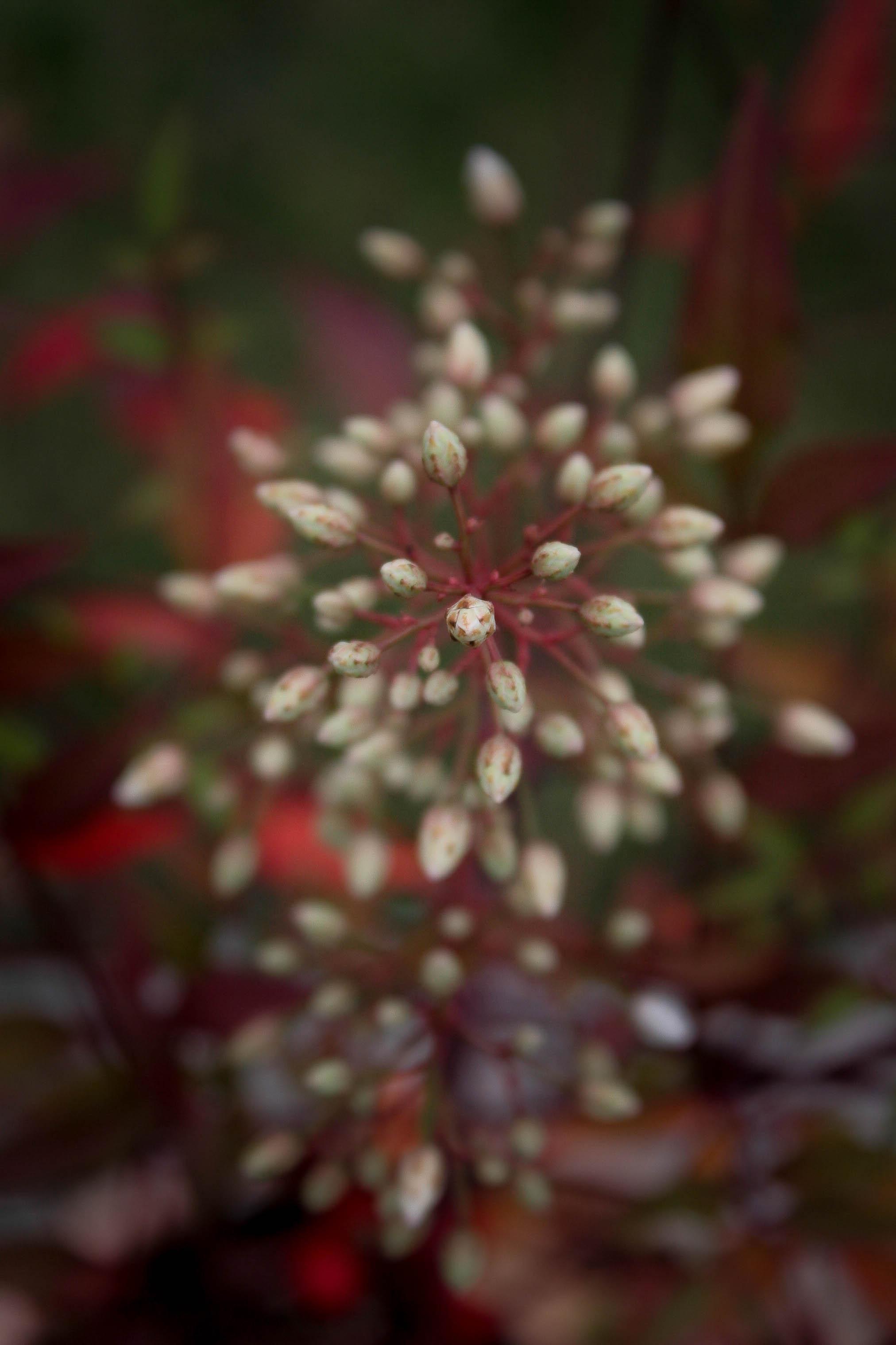 jpHumbert_Botanic-28