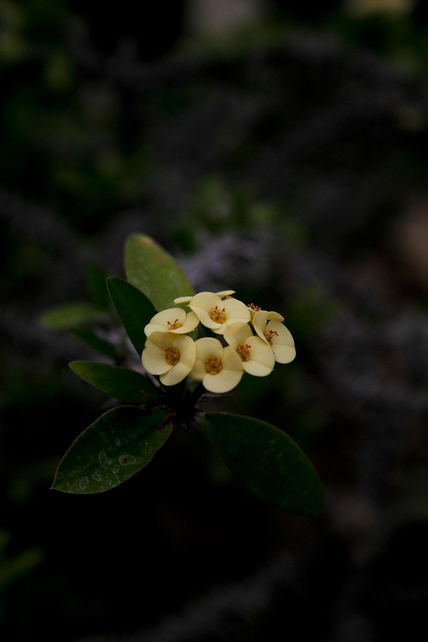 jpHumbert_Botanic-14