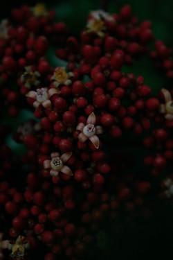 jpHumbert_Botanic-36