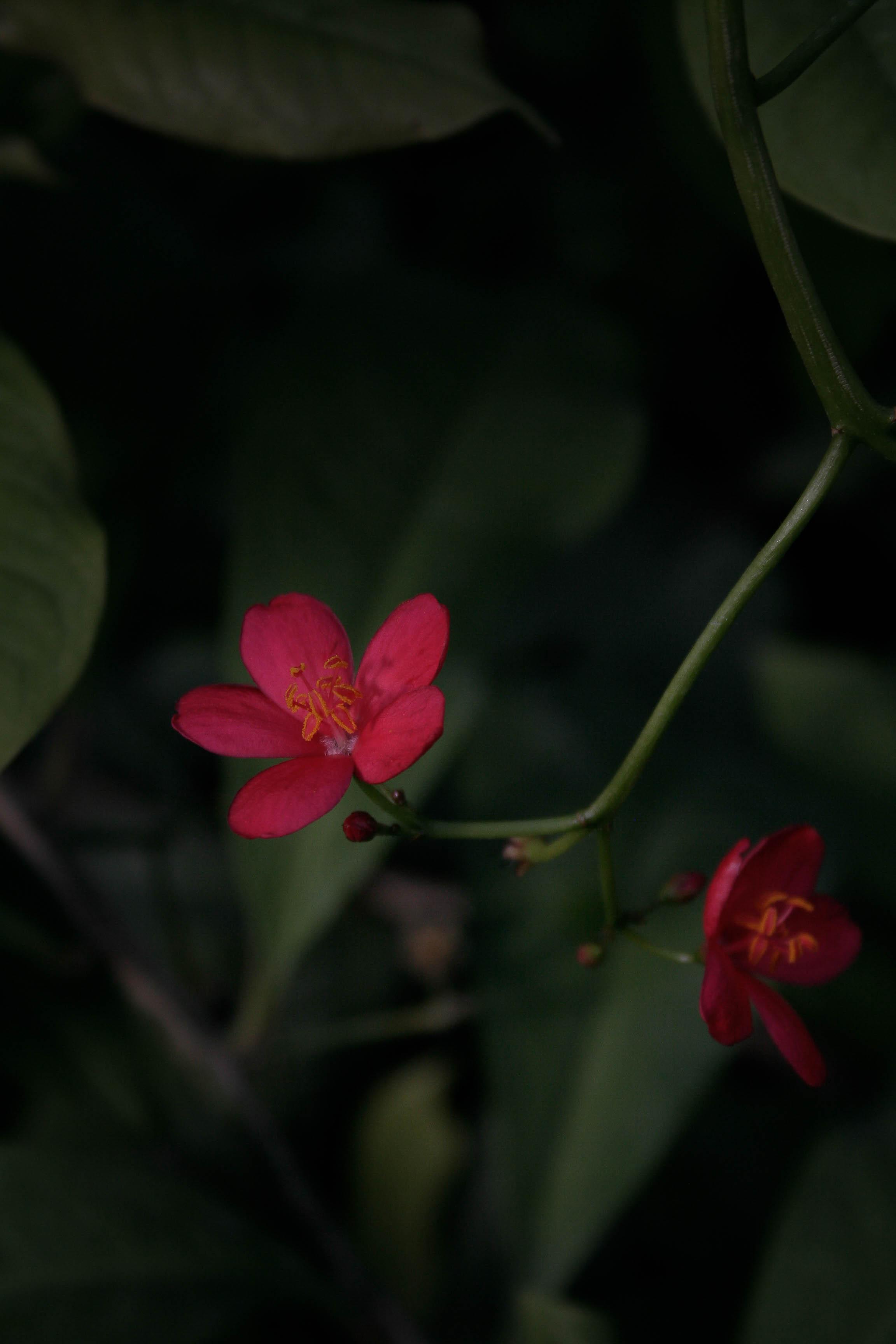 jpHumbert_Botanic-106