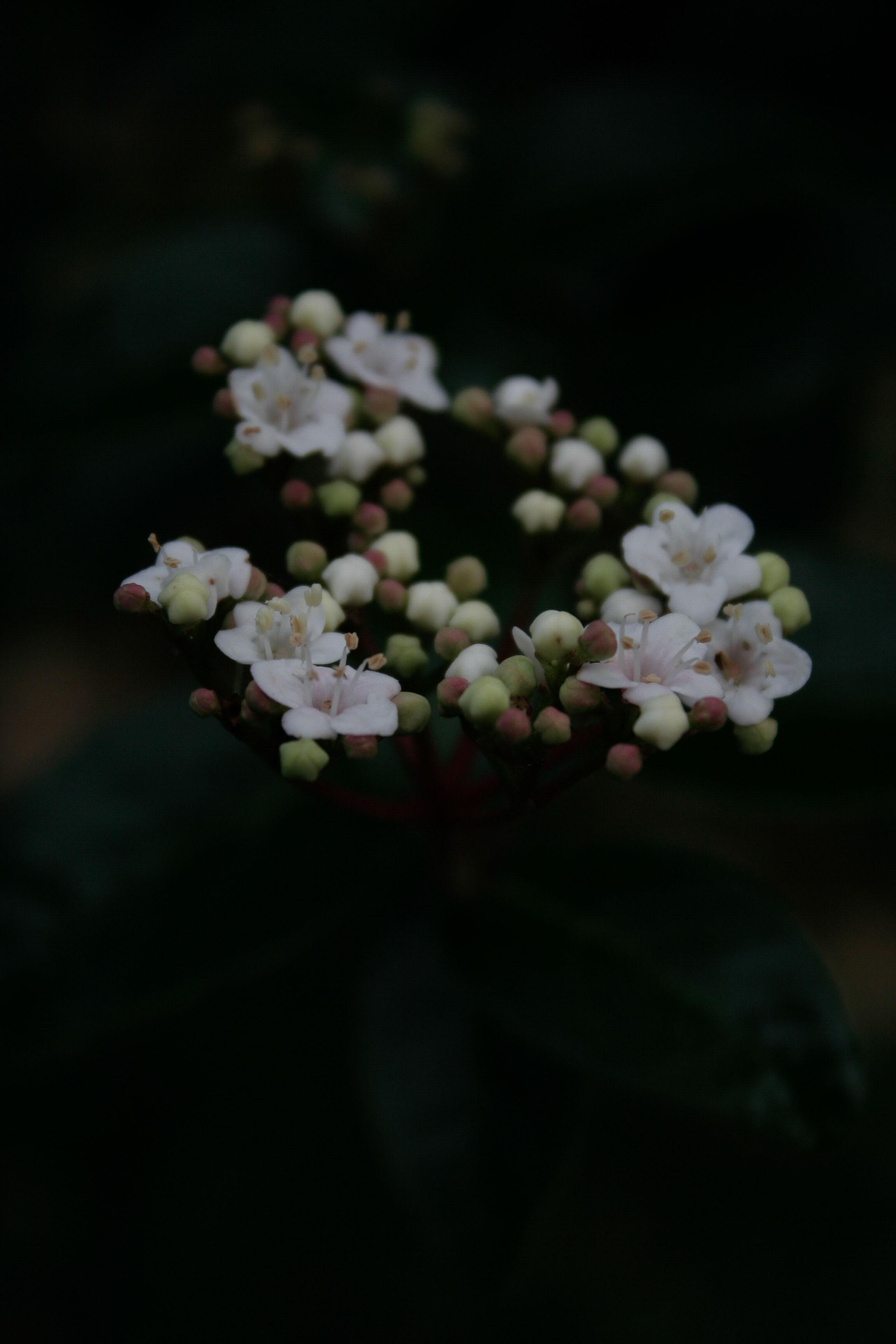 jpHumbert_Botanic-33