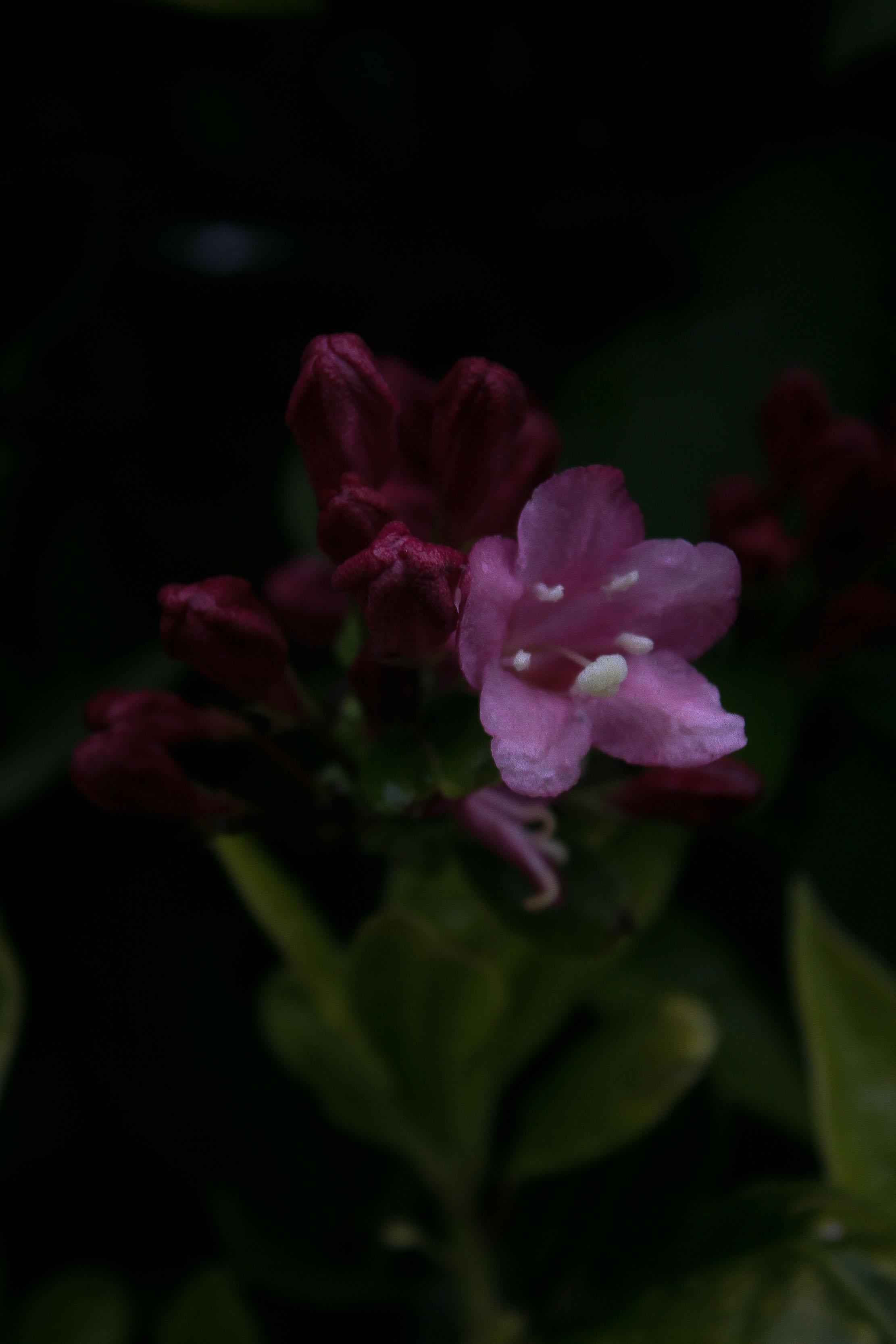 jpHumbert_Botanic-63