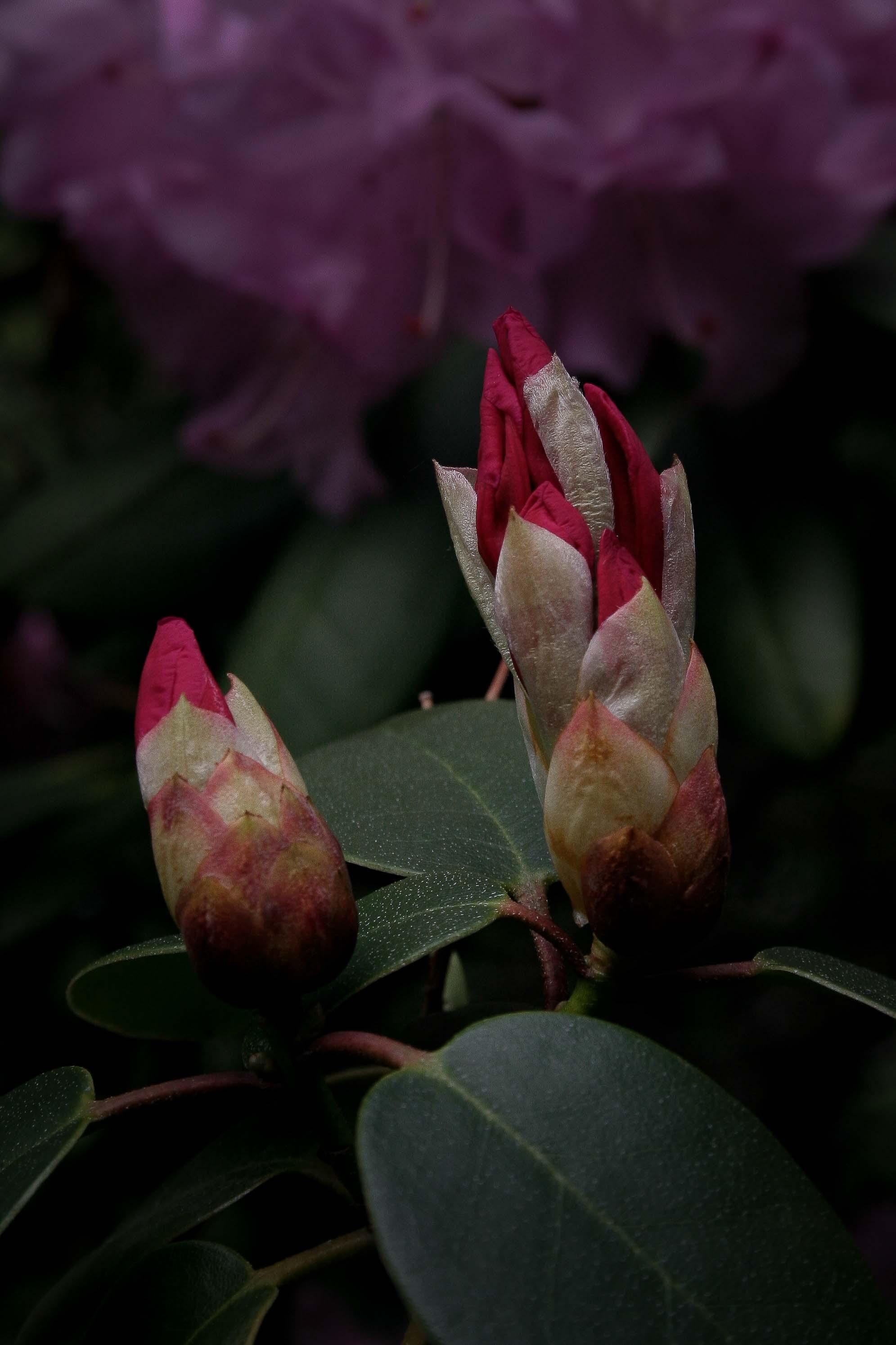 jpHumbert_Botanic-70
