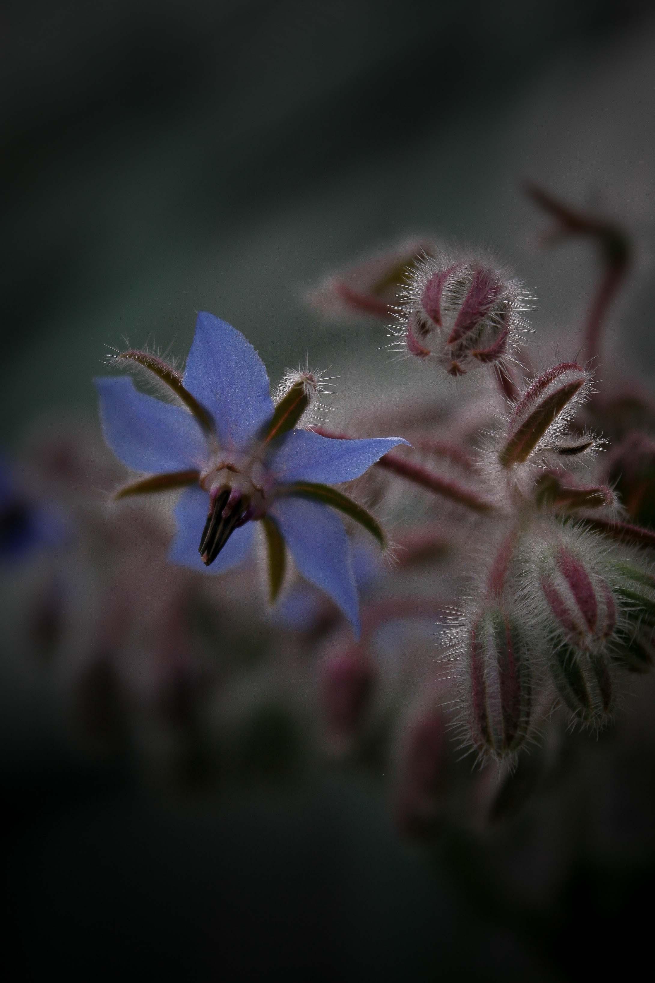 jpHumbert_Botanic-61