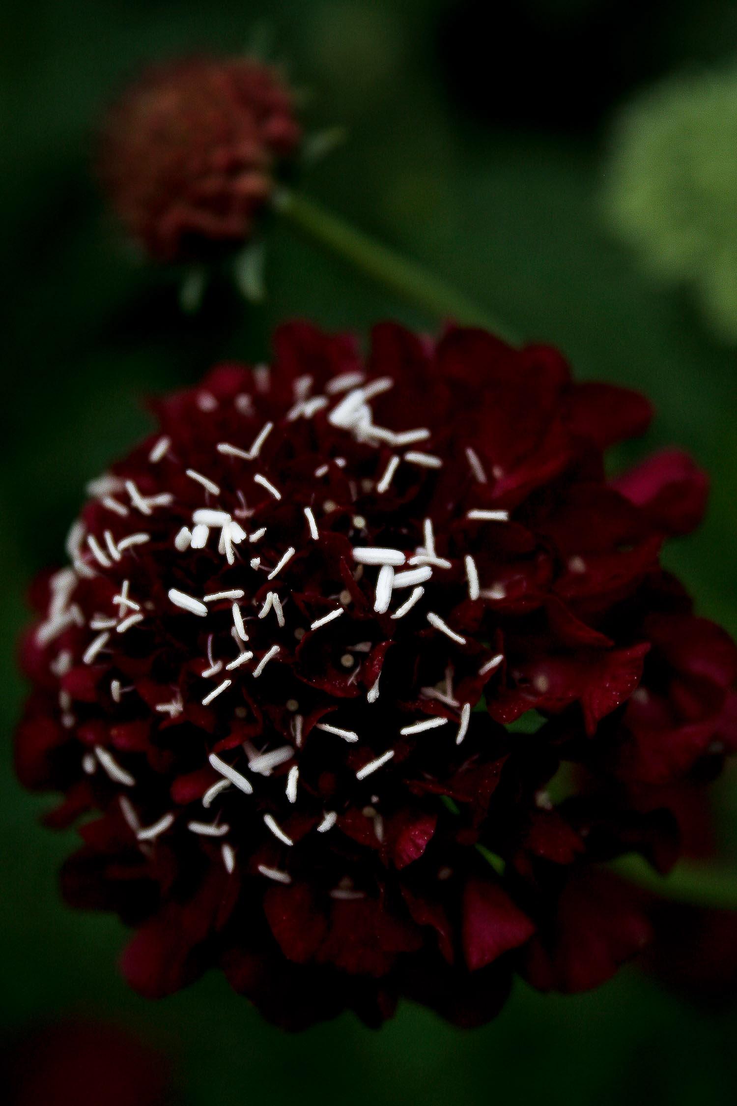 jpHumbert_Botanic-10