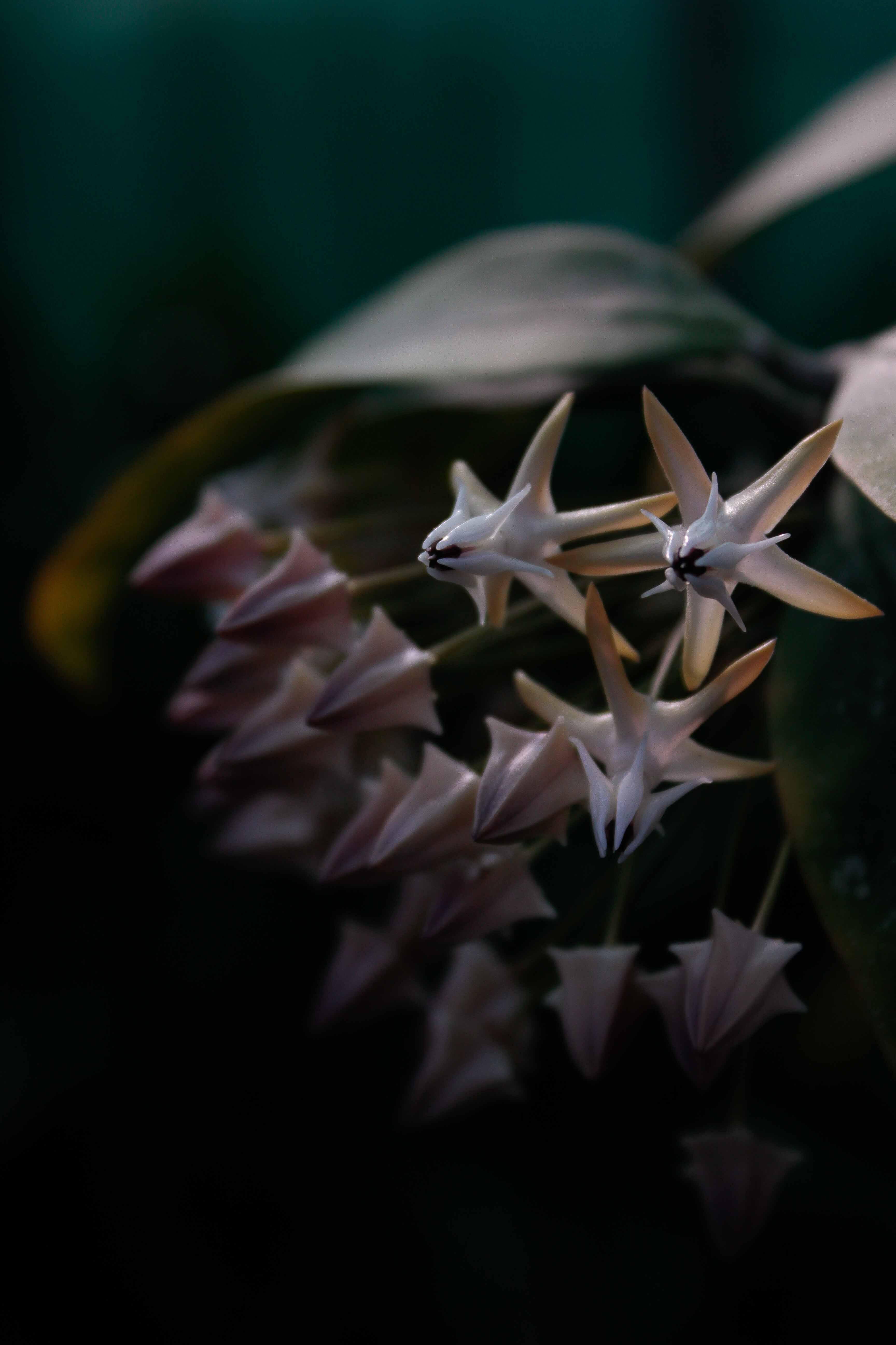 jpHumbert_Botanic-60